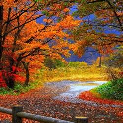 Пазл онлайн: Осенняя дорожка