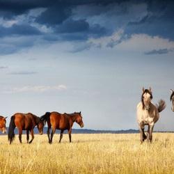Пазл онлайн: Лошади