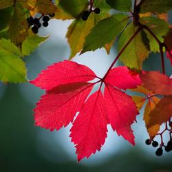 Пазл онлайн: Осенняя листва