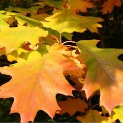 Пазл онлайн: Осенняя мозаика
