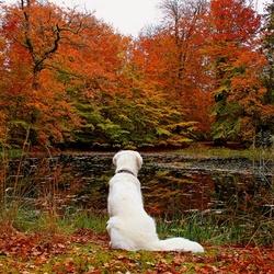 Пазл онлайн: Собака и осень
