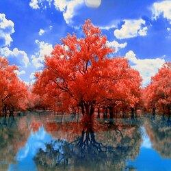 Пазл онлайн: Осень выбрала красное