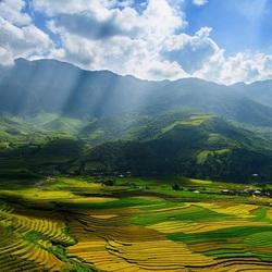 Пазл онлайн: Поле в солнечных лучах