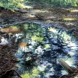 Пазл онлайн: Отражение осени