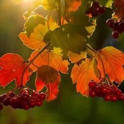 Пазл онлайн: Вкус осени
