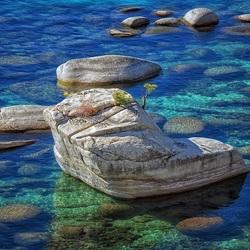 Пазл онлайн: Каменистое дно