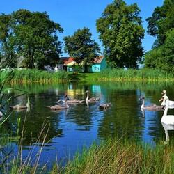 Пазл онлайн: Деревенский пруд