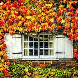 Пазл онлайн: Осенняя сказка
