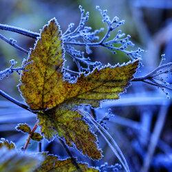 Пазл онлайн: Скоро зима