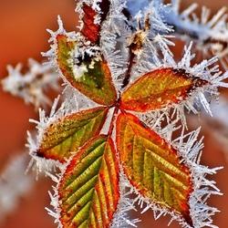Пазл онлайн: Дыхание зимы