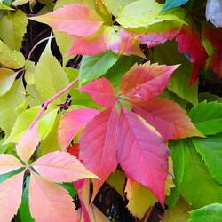 Пазл онлайн: Ах, осень