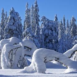 Пазл онлайн: Зимние причуды