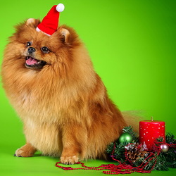 Пазл онлайн: Год жёлтой собаки