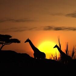Пазл онлайн: Африка