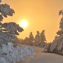 Пазл онлайн: Желтое зимнее солнце