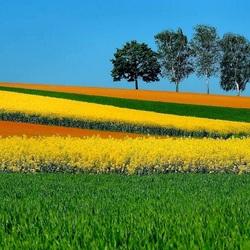 Пазл онлайн: Цветное поле