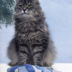 Пазл онлайн: Кот и варежки
