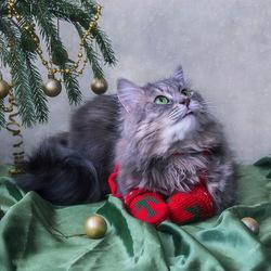 Пазл онлайн: Кошка в рукавичках