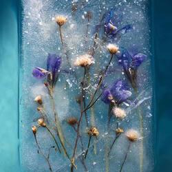 Пазл онлайн: Цветы во льду
