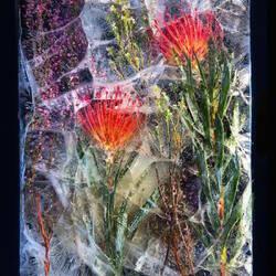 Пазл онлайн: Замерзшие цветы