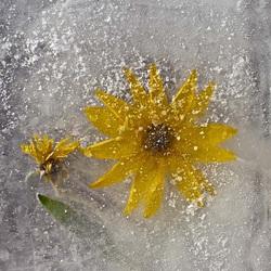 Пазл онлайн: Лед и цветы