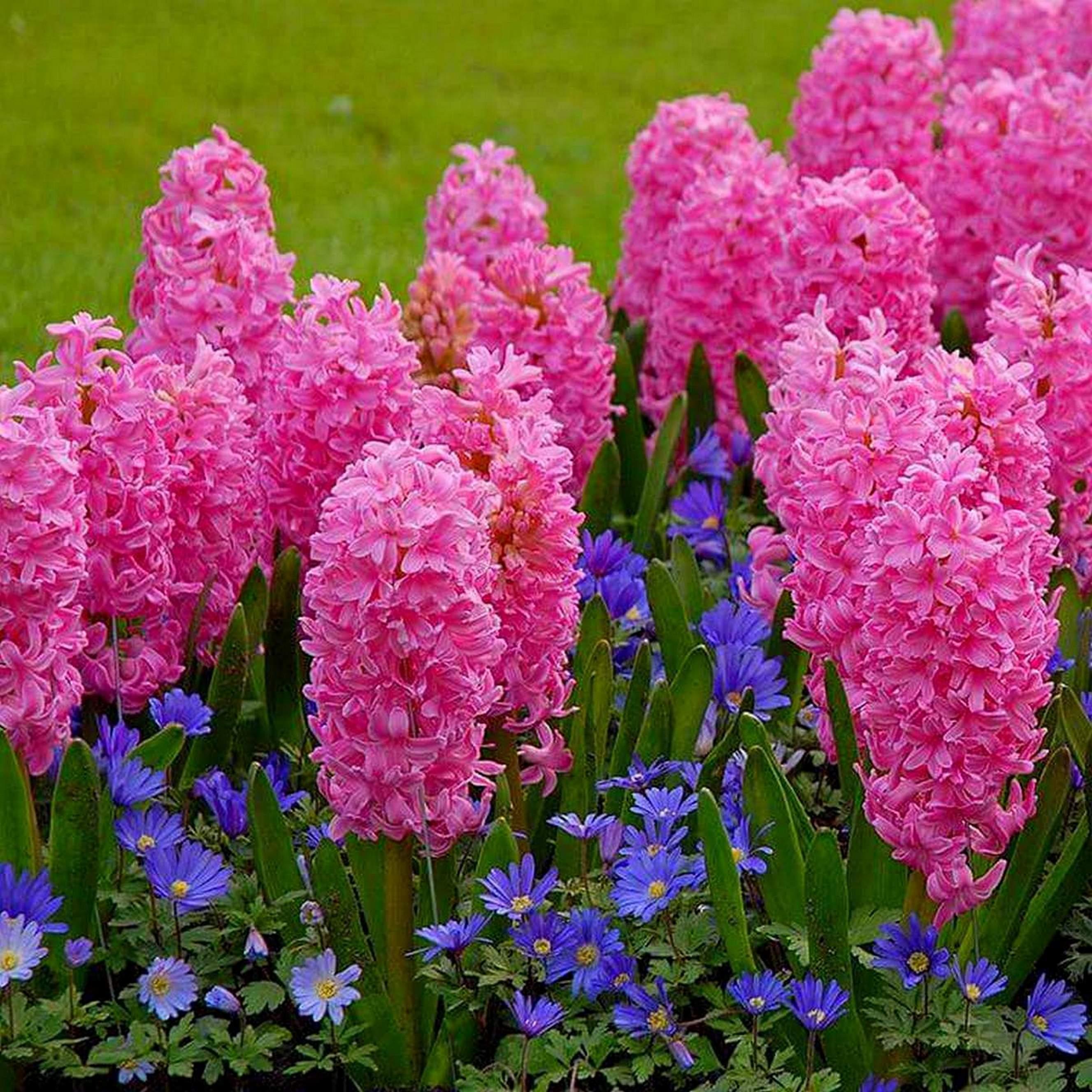 Цветущие цветы многолетники фото с названиями