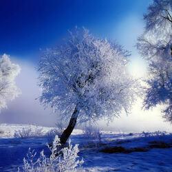 Пазл онлайн: Хрустальная зима