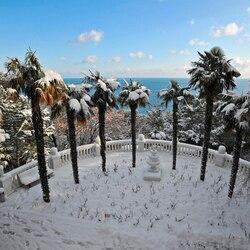 Пазл онлайн: Заснеженные пальмы