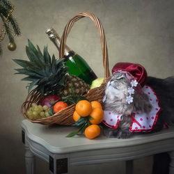 Пазл онлайн: Новогодний котонатюрморт