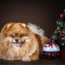 Пазл онлайн: Новогодняя собачка