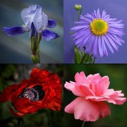 Пазл онлайн: Садовые красавцы