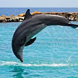 Пазл онлайн: Прыжок дельфина