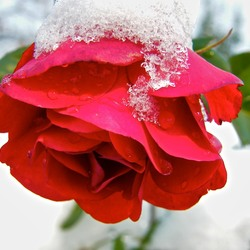 Пазл онлайн: Принакрылась снегом