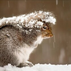 Пазл онлайн: Зима, холодно...