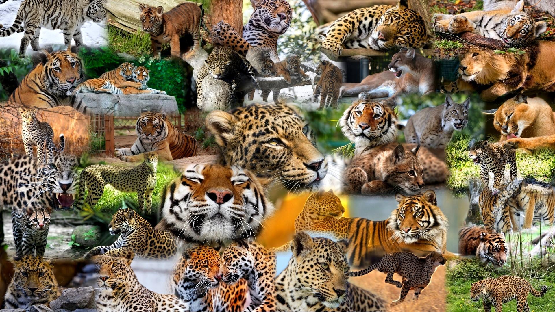 Много диких животных фото