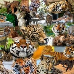 Пазл онлайн: И это все кошачьи
