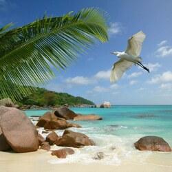 Пазл онлайн: Сейшелы
