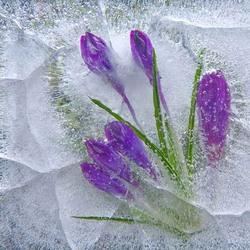 Пазл онлайн: Мелодия зимы