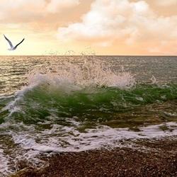 Пазл онлайн: Чайка над морем
