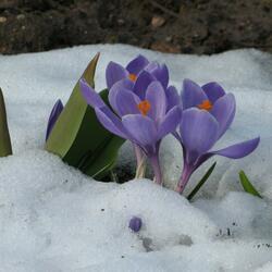 Пазл онлайн: Весне навстречу