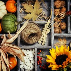 Пазл онлайн: Ранняя осень