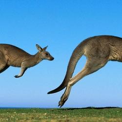 Пазл онлайн: Австралия
