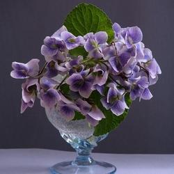 Пазл онлайн: Весна в бокале