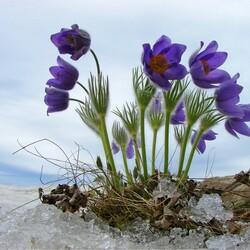 Пазл онлайн: Весны желаю