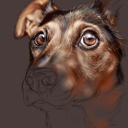 Пазл онлайн: Взгляд собаки