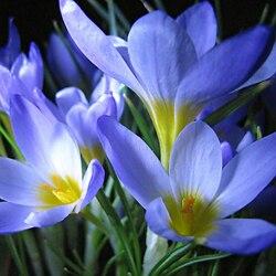 Пазл онлайн: Весны творенье