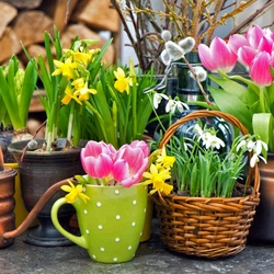 Пазл онлайн: Весенние цветы