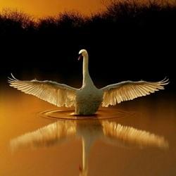 Пазл онлайн: Расправь крылья
