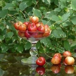 Пазл онлайн: Вкусная черешенка