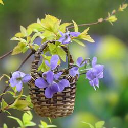 Пазл онлайн: Весны привет